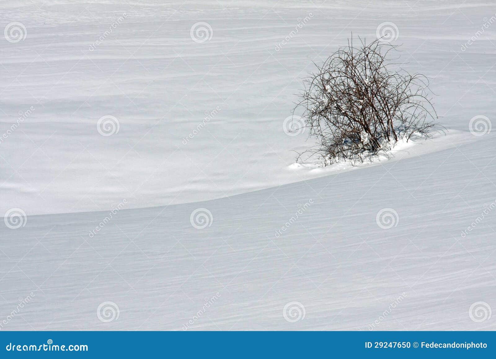 Download Árvores Nas Dolomites Italianas No Inverno Foto de Stock - Imagem de fundos, gramado: 29247650