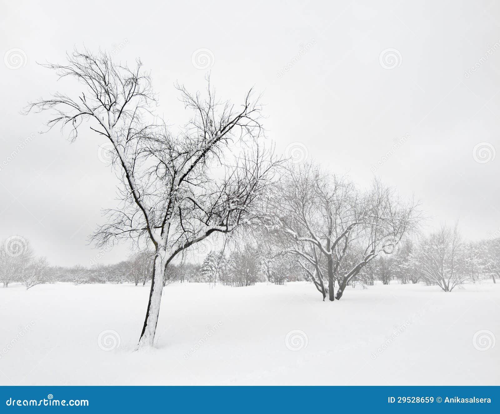 Árvores no blizzard do inverno