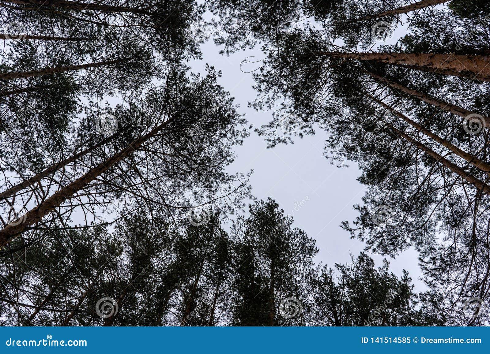Árvores no céu