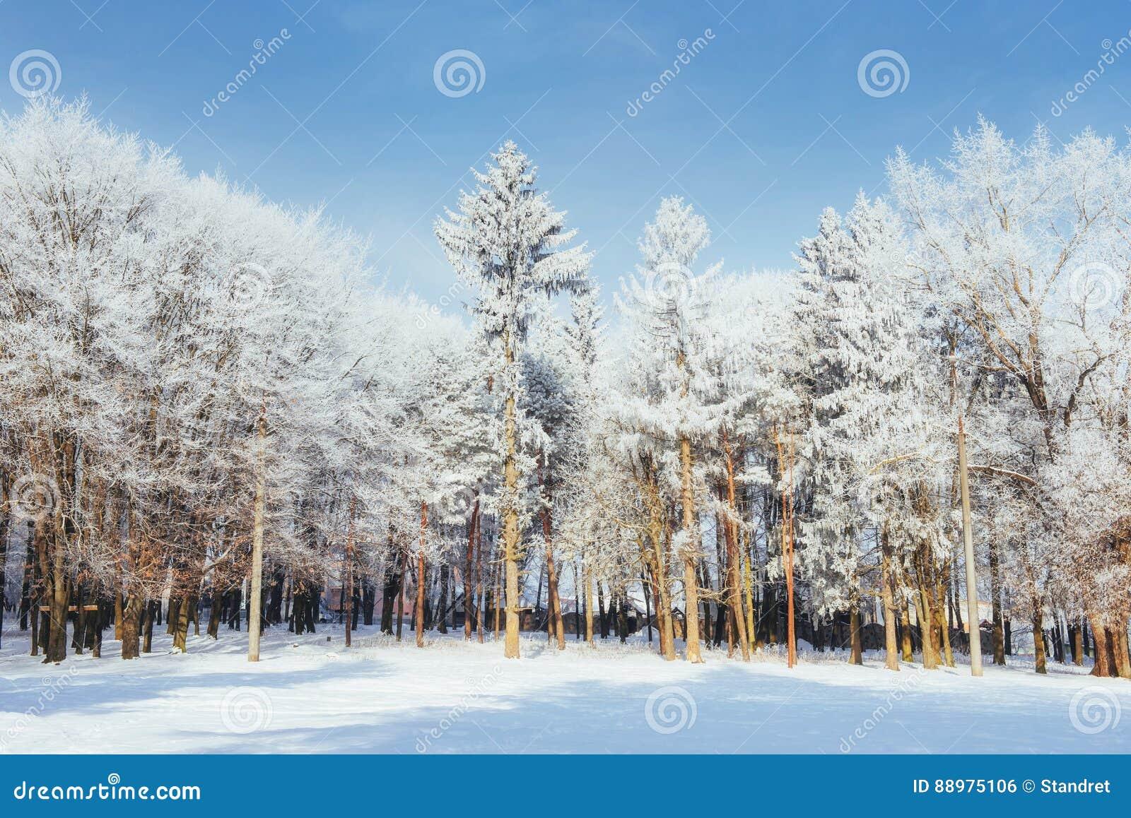 Árvores no dia e na neve de inverno frio