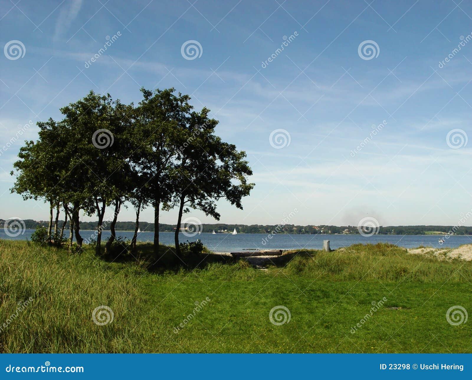 árvores no fjord