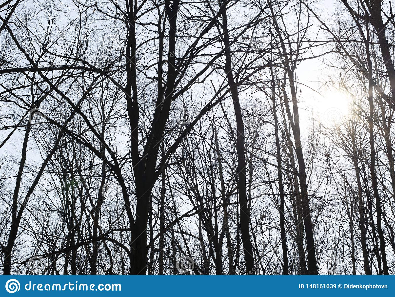 Árvores no fundo do céu