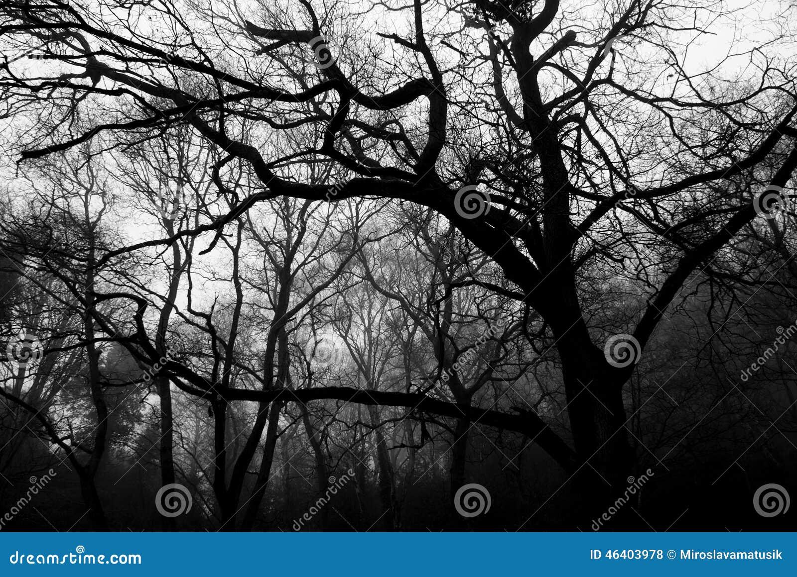 árvores Pretas Foto De Stock Imagem De Depression Floresta 46403978