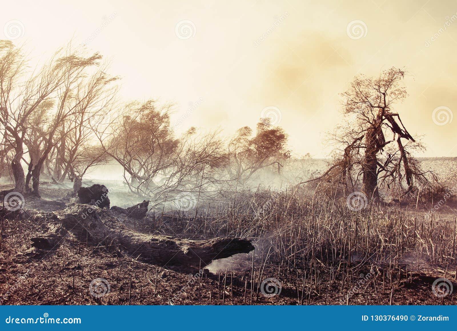 Árvores queimadas após um incêndio florestal