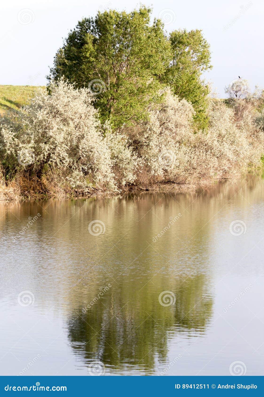 Árvores refletidas em um lago