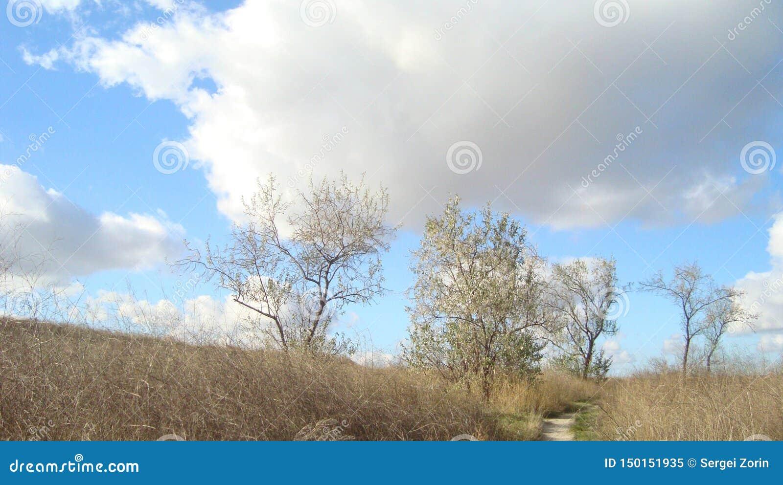 Árvores subdimensionados em um campo coberto de vegetação sob nuvens do céu azul em um dia claro