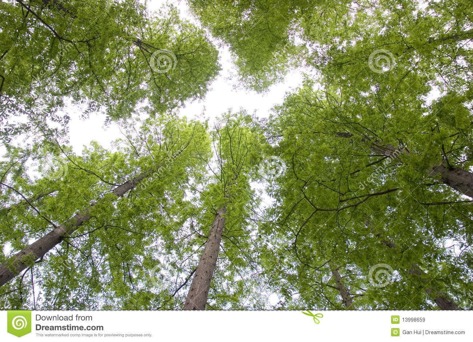 Árvores verdes para cima