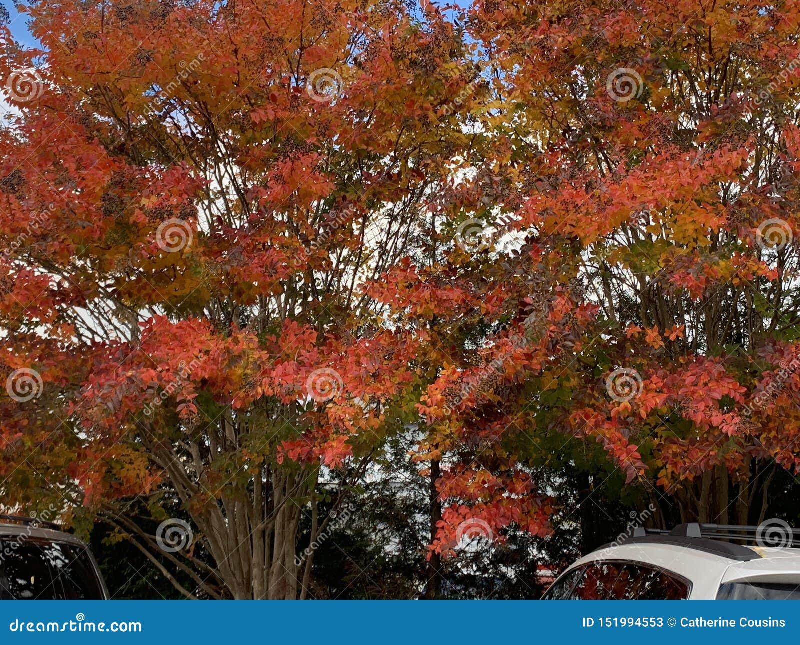 Árvores vermelhas e cor-de-rosa na queda