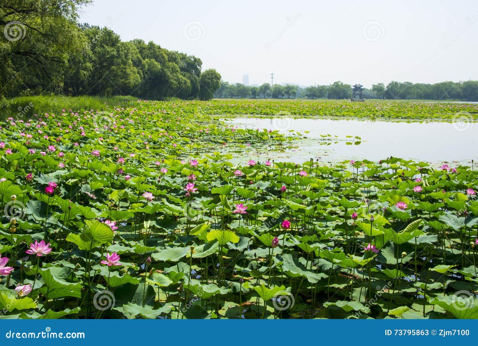 Ásia China, Pequim, o palácio de verão, arquitetura de ŒClassical do ¼ do landscapeï do verão, Lotus Lake,