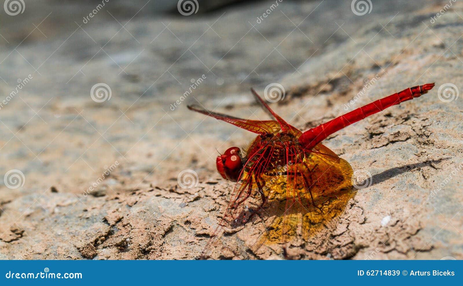 """Dragonfly _"