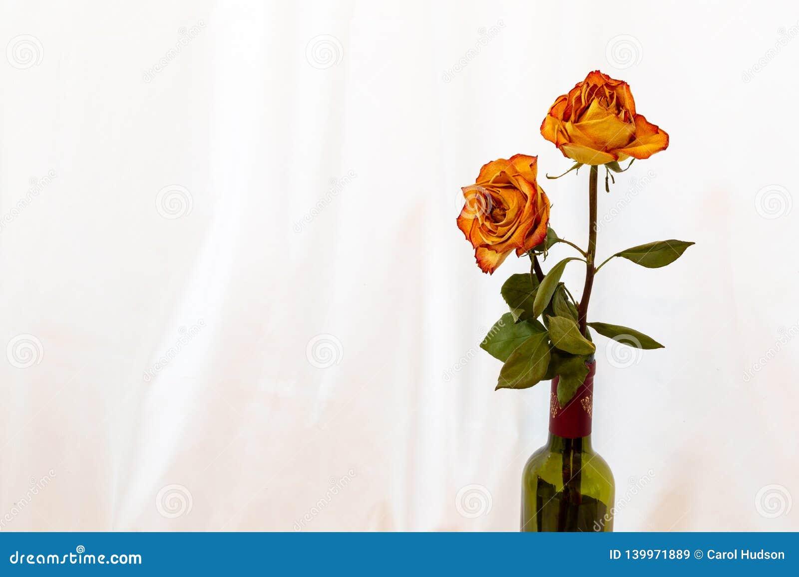 两与红色外缘玫瑰的古色古香的干桔子在一个酒瓶有被隔绝的白色背景