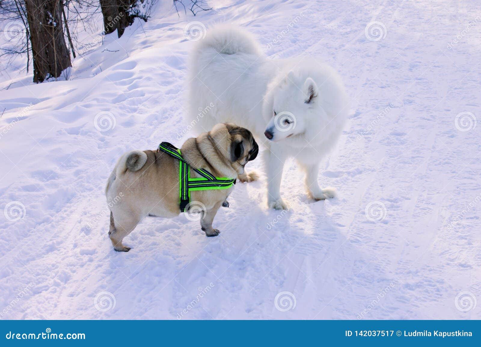 两条狗为步行见面了在公园