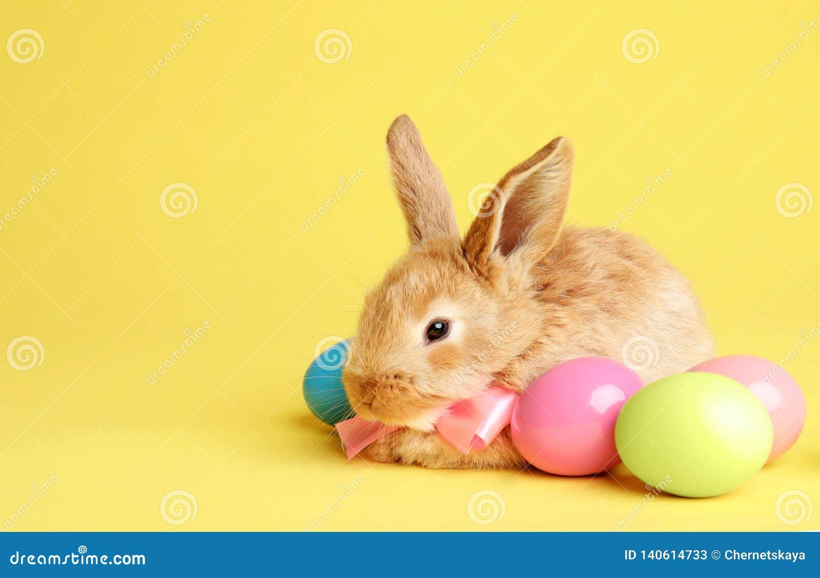 与逗人喜爱的蝶形领结的可爱的毛茸的复活节兔子和在颜色背景的被洗染的鸡蛋
