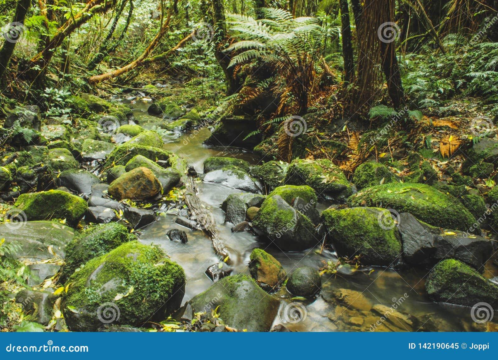 一点河在新西兰流经雨林