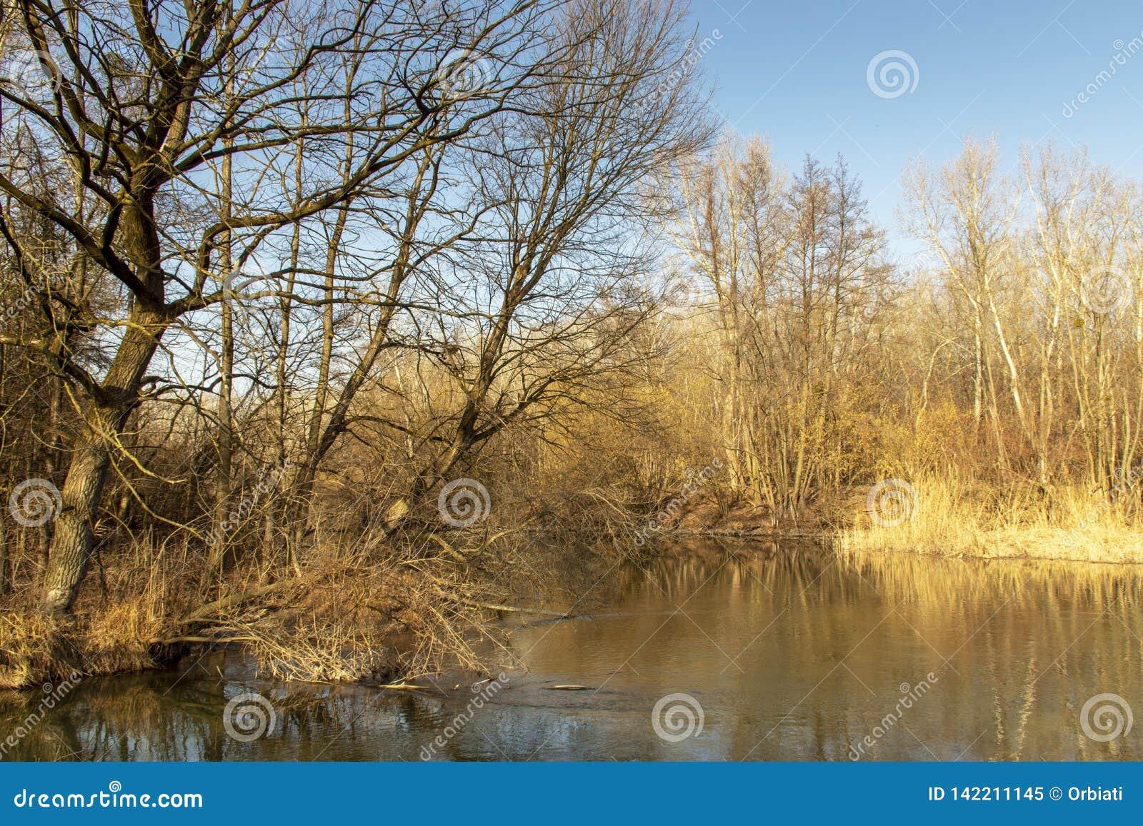从Szigetköz的自然照片在匈牙利