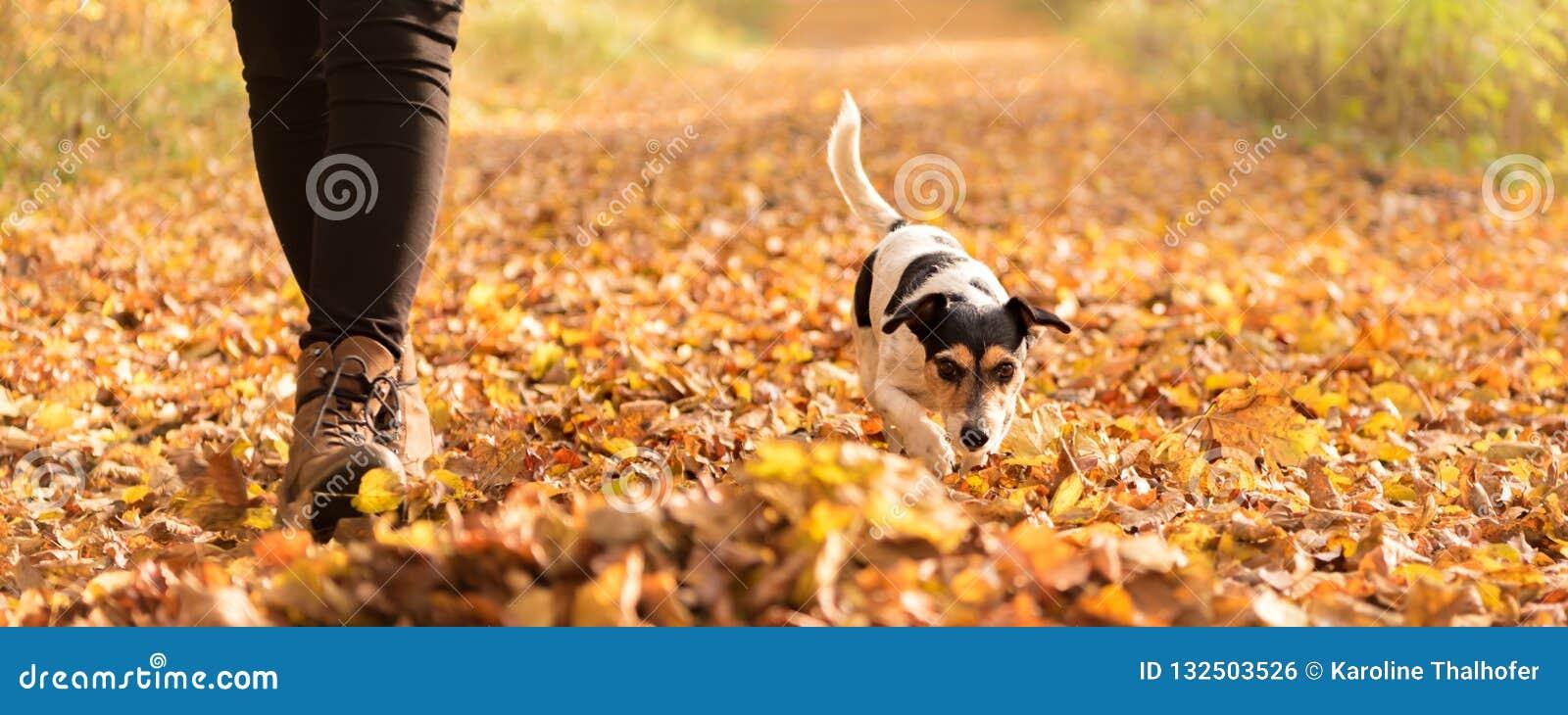 Ägare en Jack Russell Terrier i höstsidor