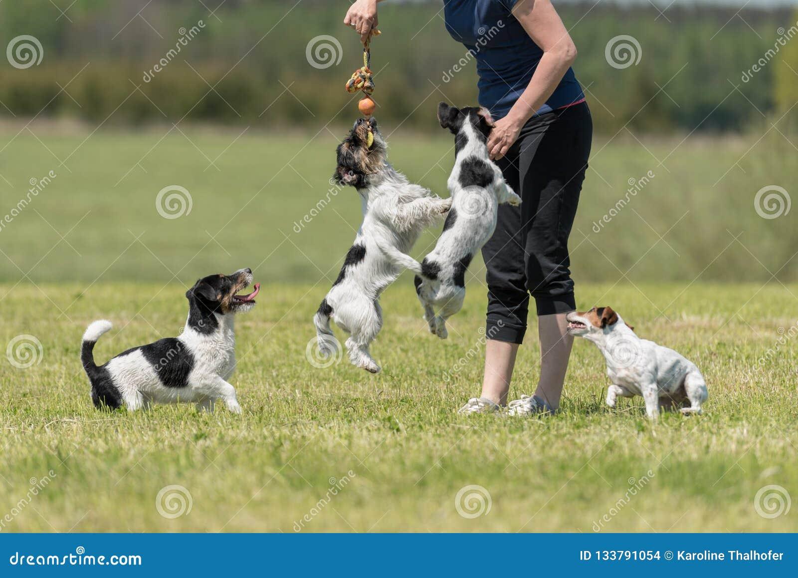 Ägaren går och spelar med många hundkapplöpning på en äng