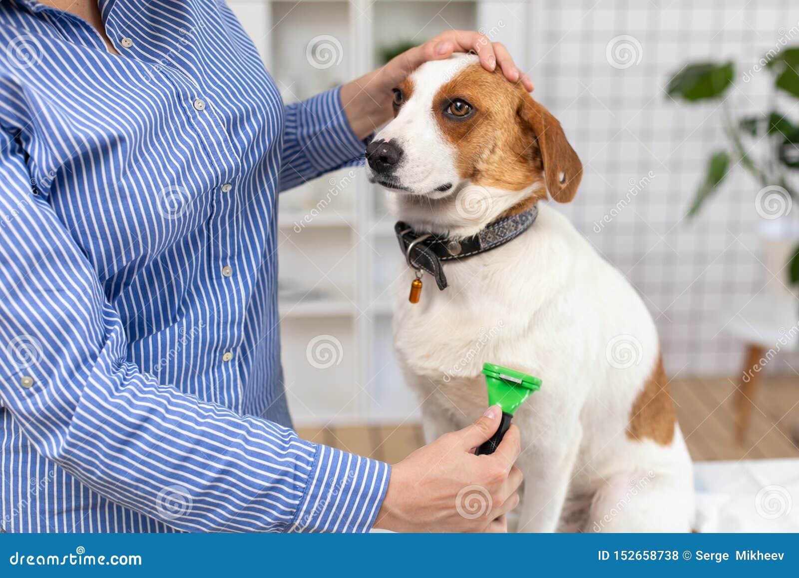 Ägaren kammar hundhåret med en hårkam close upp suddighet bakgrund