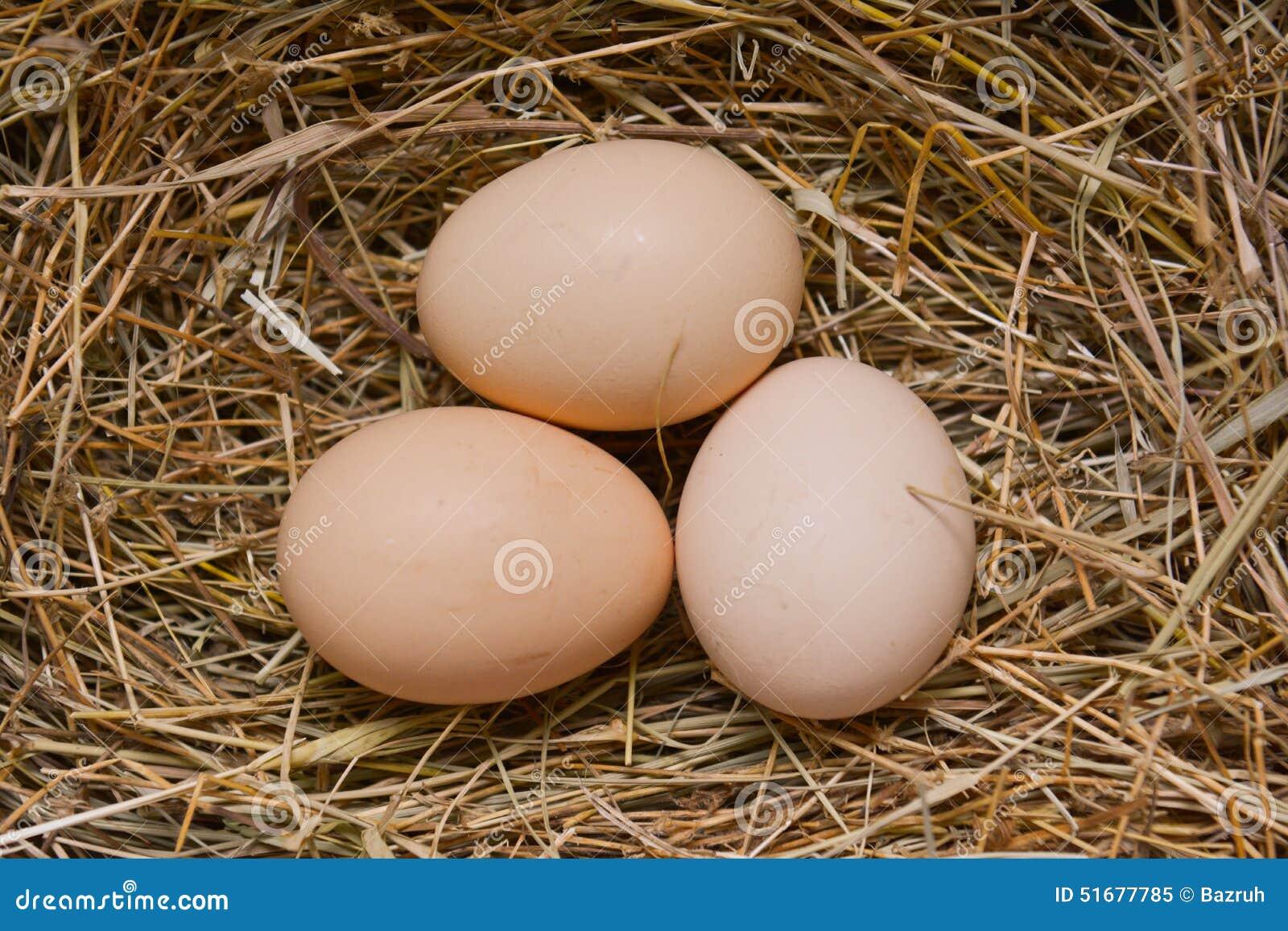 Ägg i ett rede på hö