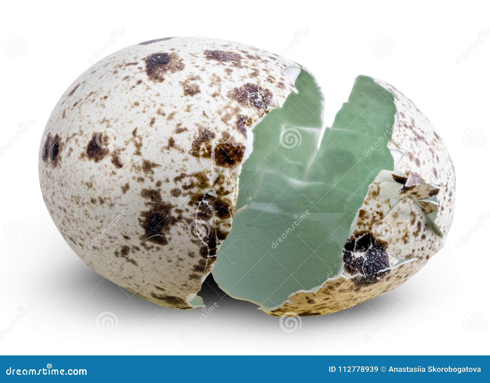 Äggskal av vaktelägg som isoleras med skugga