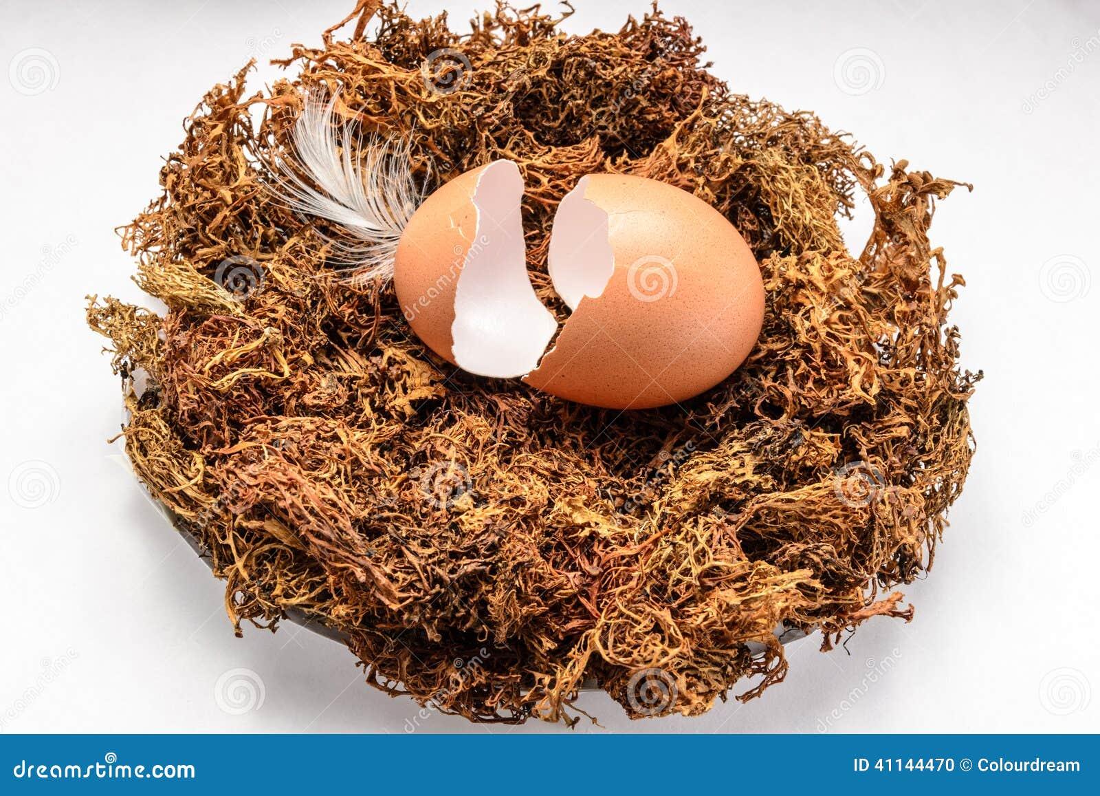 Äggskal i redet