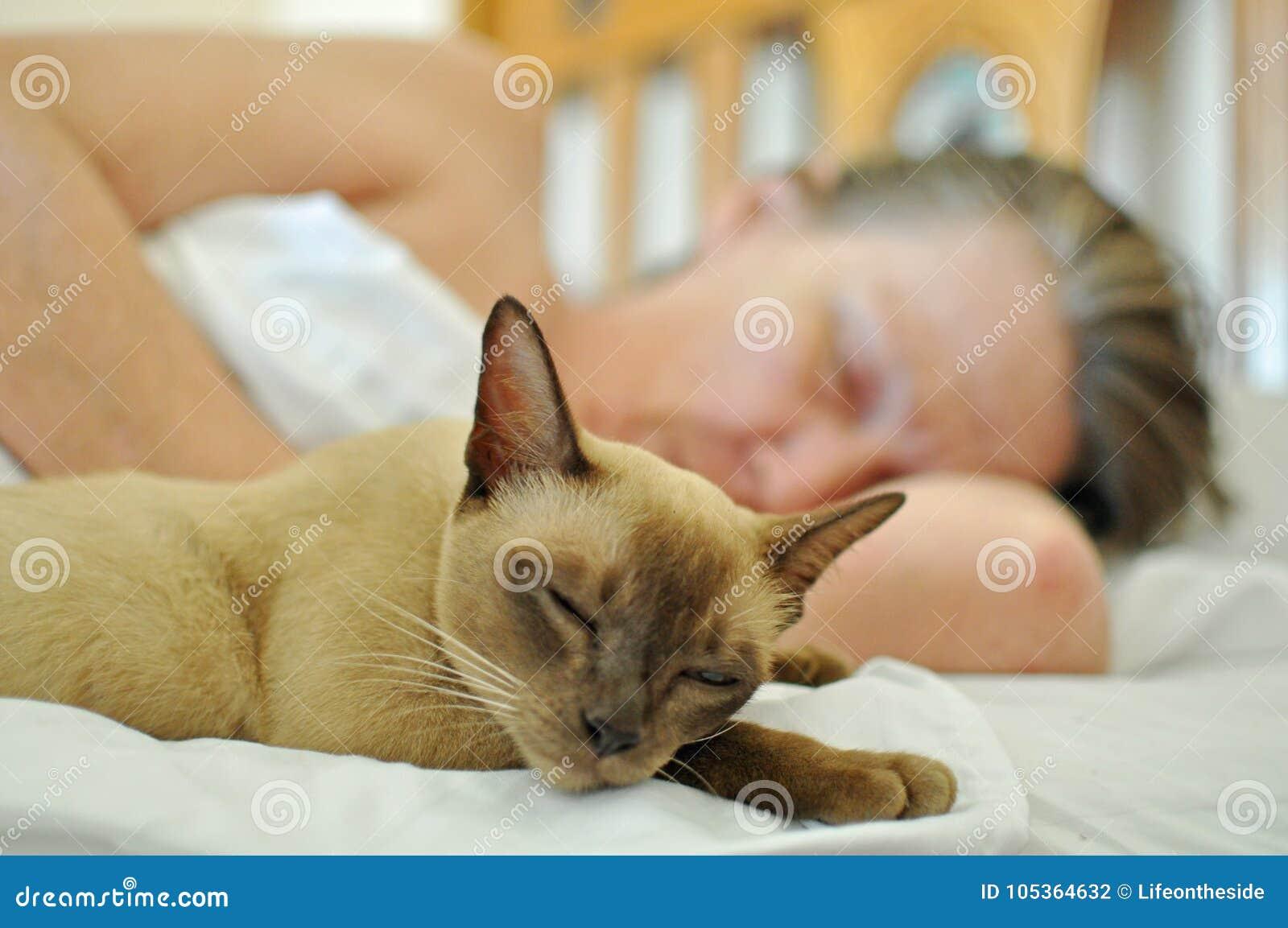 Älsklings- katt som sover på säng med den mogna äldre kvinnan