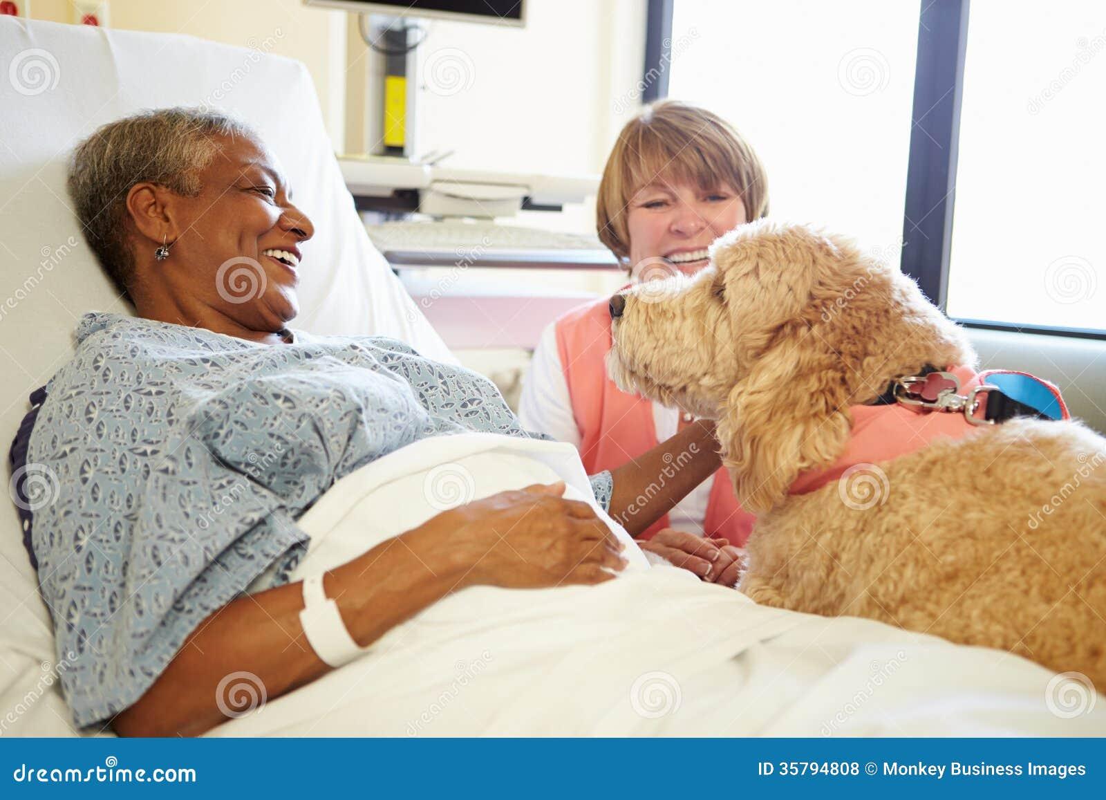 Älsklings- terapihund som besöker den höga kvinnliga patienten i sjukhus