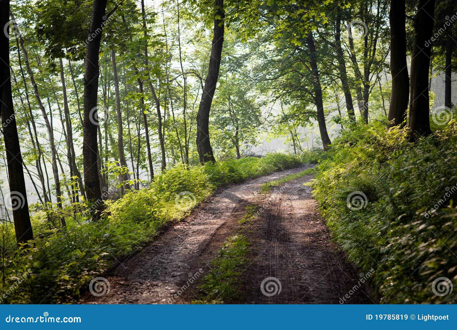 Älskvärd skogbana i ottasolsken