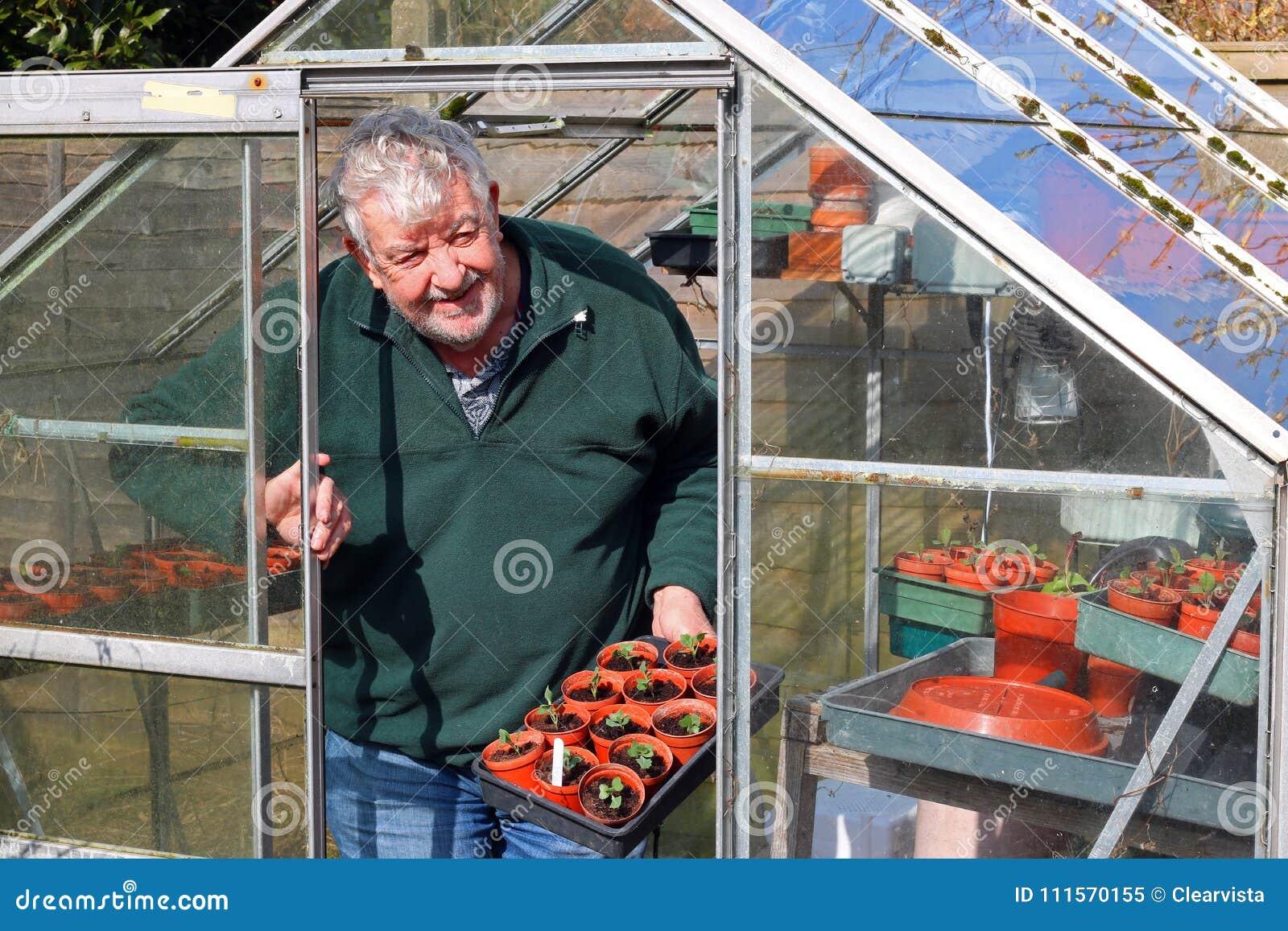 Älterer Gärtner Im Gewächshaus Oder Im Glashaus Stockbild - Bild von ...