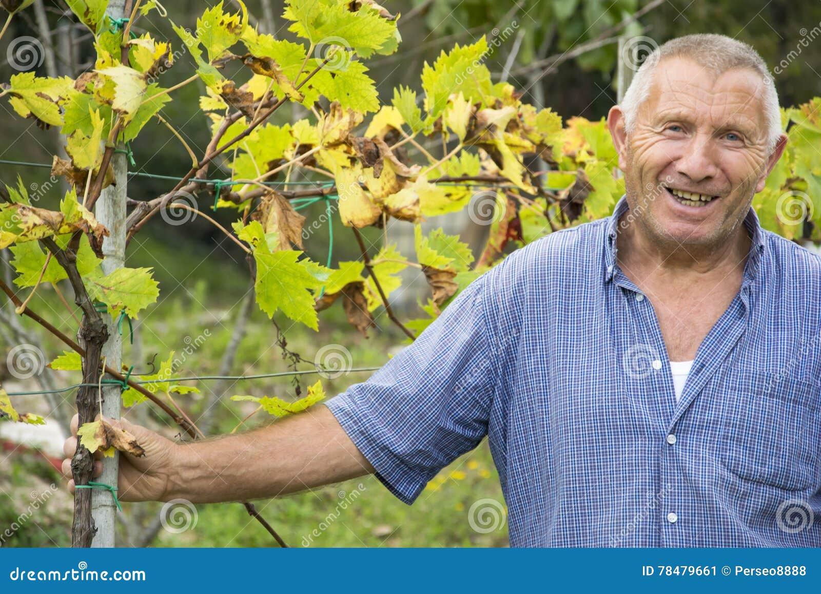 Älterer Mann (wirklicher italienischer Winemaker, kein Modell) nach der Arbeit lächelnd in einem Weinberg, Chiantiregion, Toskana