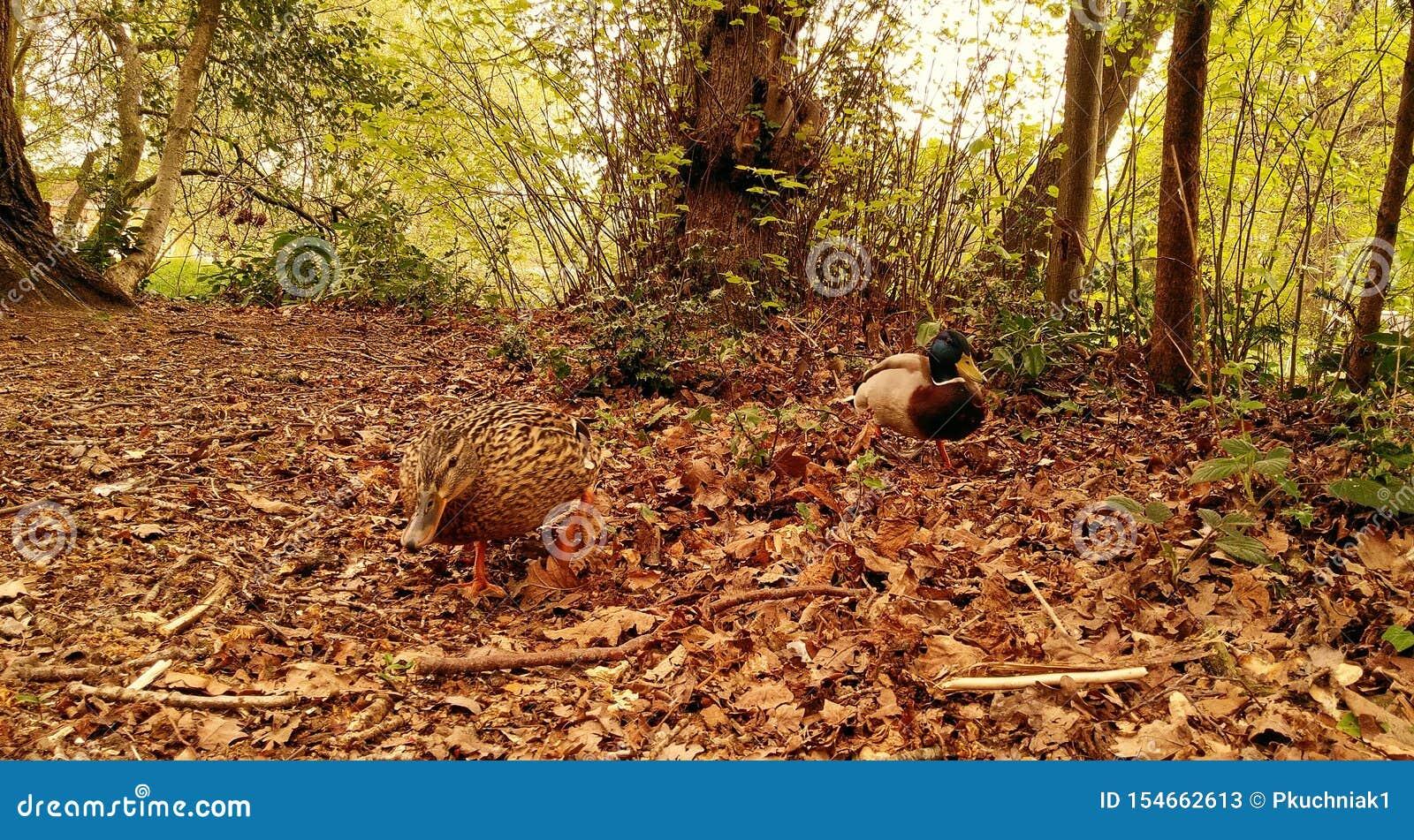 Herrarna i skogen - Google bcker, resultat