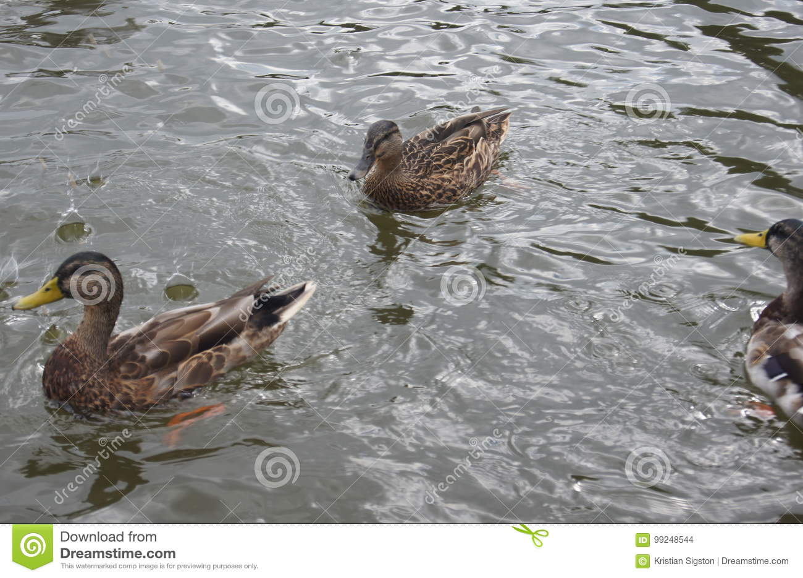 Änder i vattnet