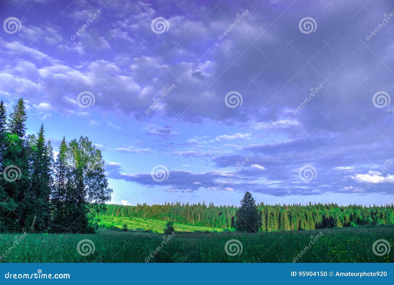 Äng för sommarlandskapbjörk, skog i bakgrunden