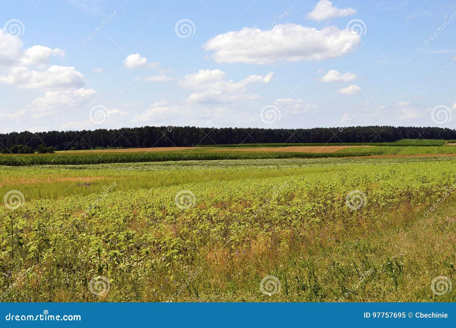 Ängar och fält i neburgeren Heide för ¼ för Lueneburg hed LÃ
