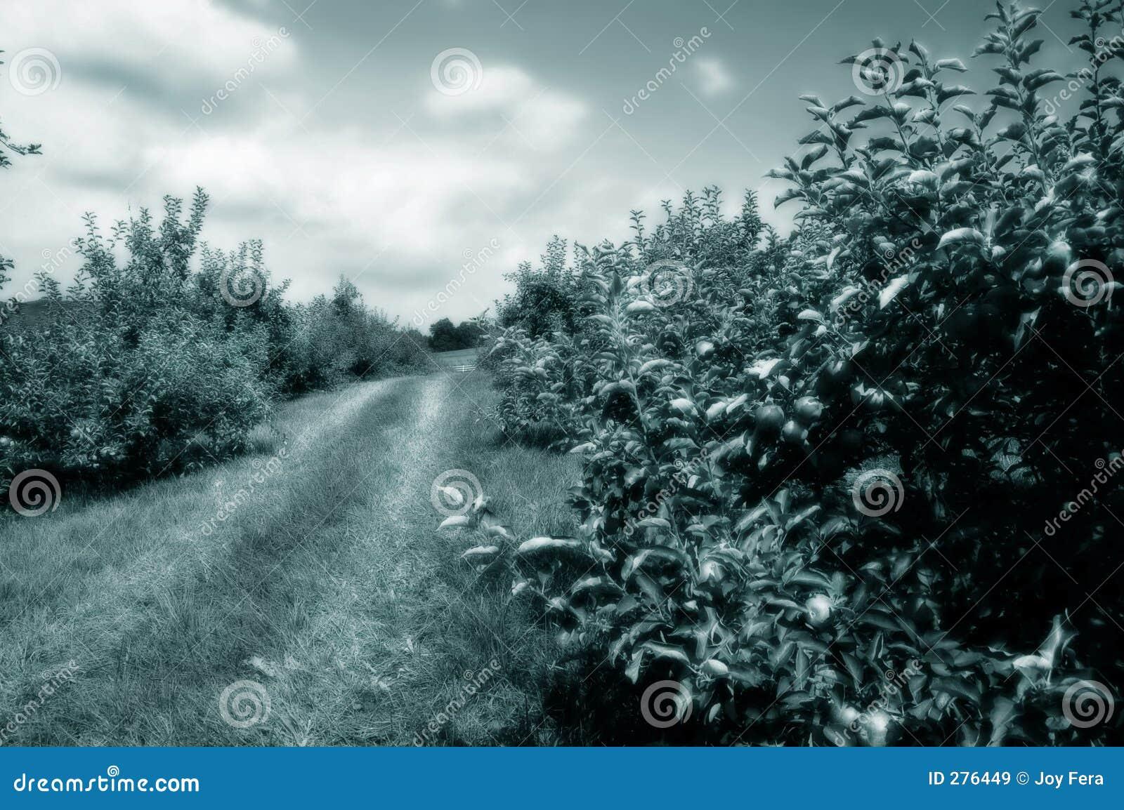 äpple - tonad grön fruktträdgård