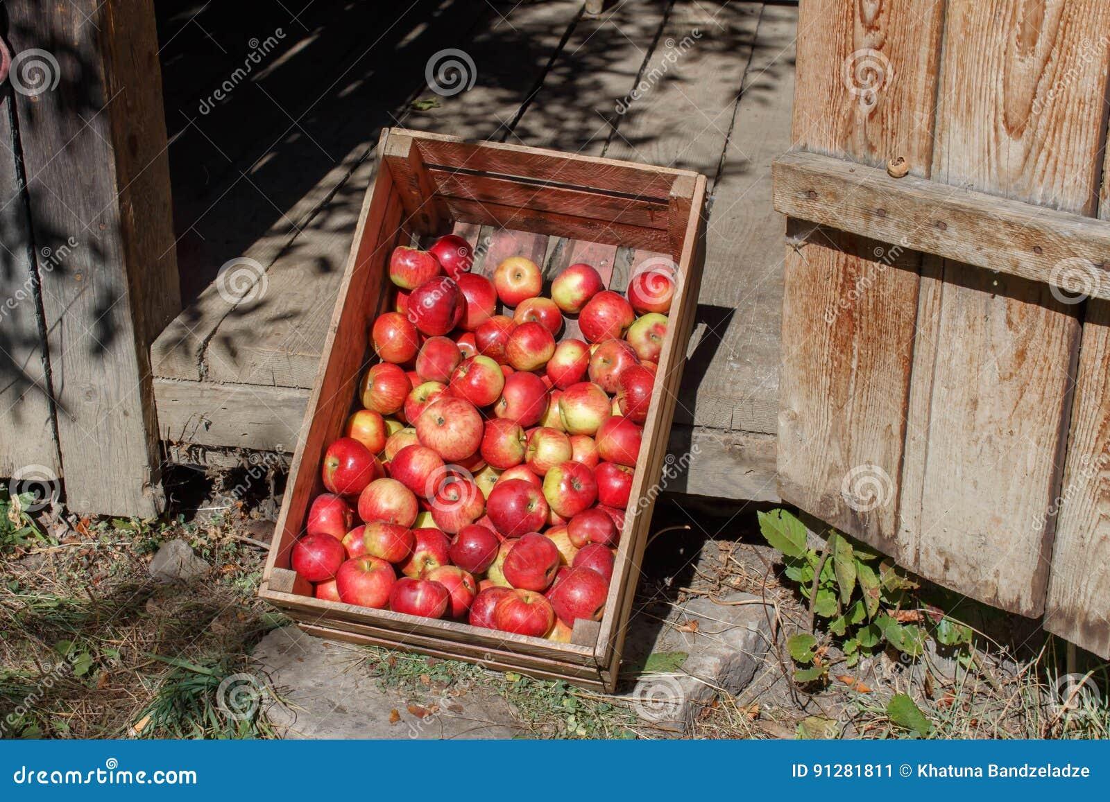 äpplen box red Nytt valda röda äpplen i en träspjällåda