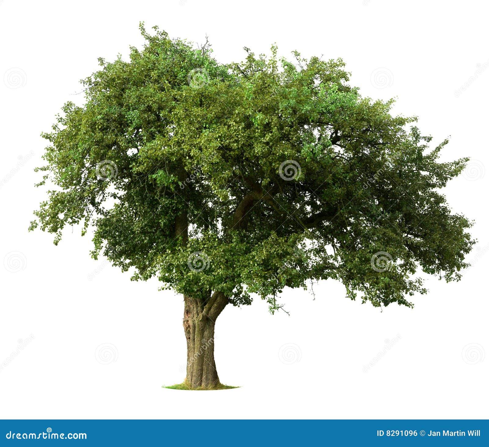 äpplet isolerade treen