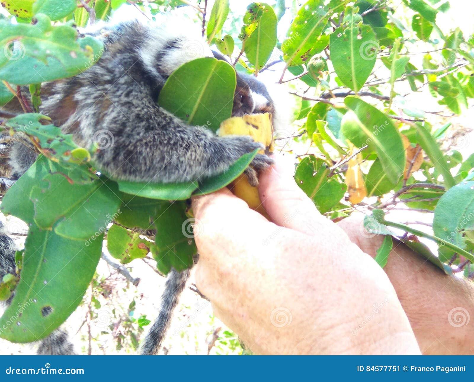 Äta för apa