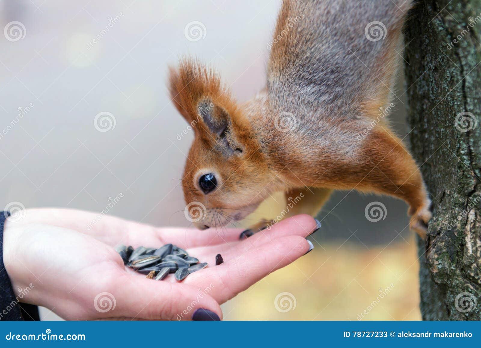 äta handekorren Vitryssland Gomel parkerar