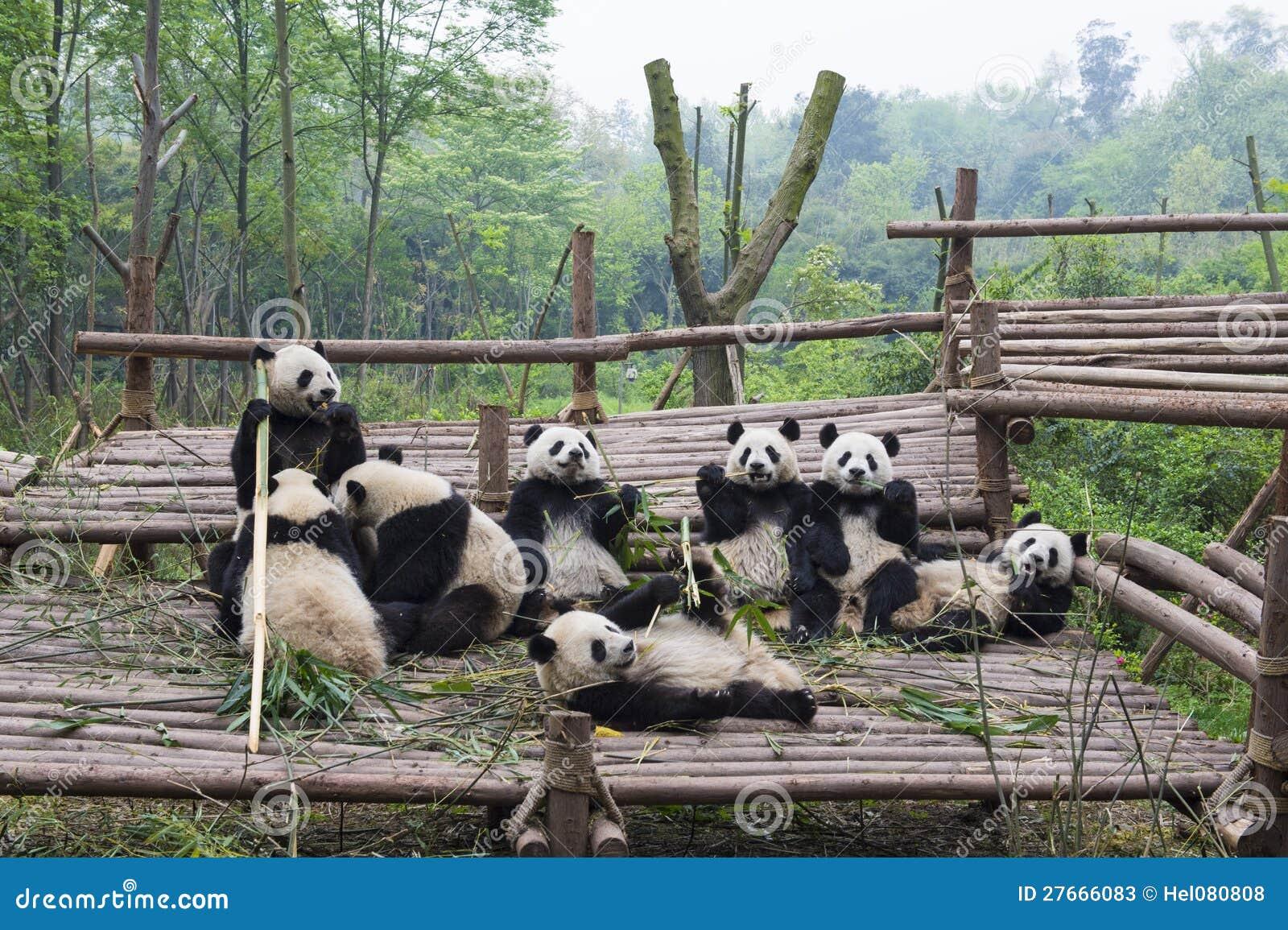 Äta Pandas