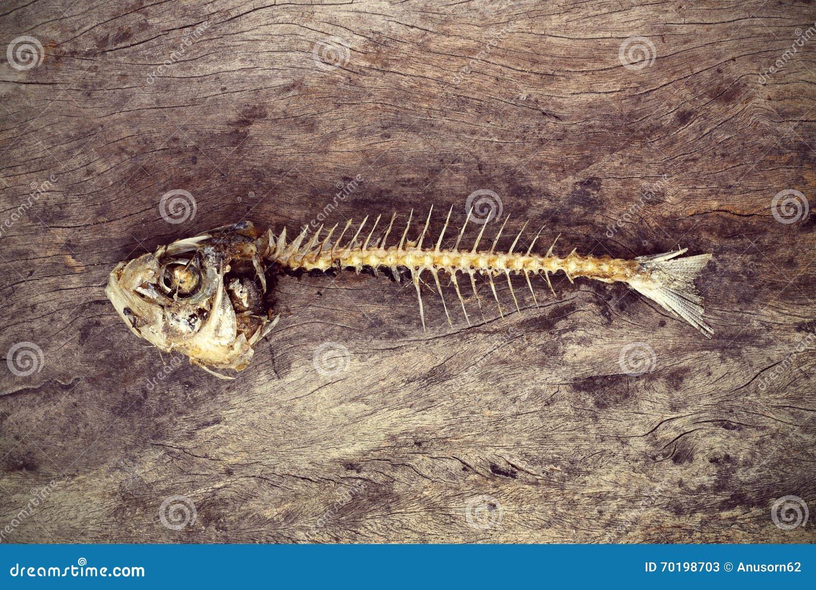 Äten fisk med head och svansen