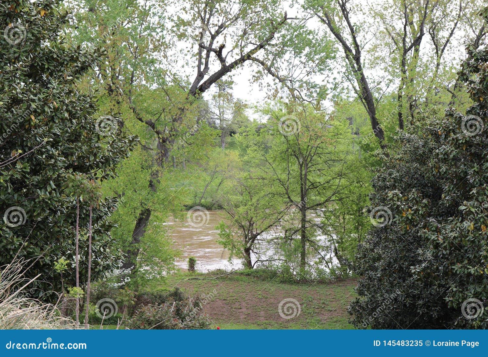 Ätherische Schönheit von Bäumen und von Fluss