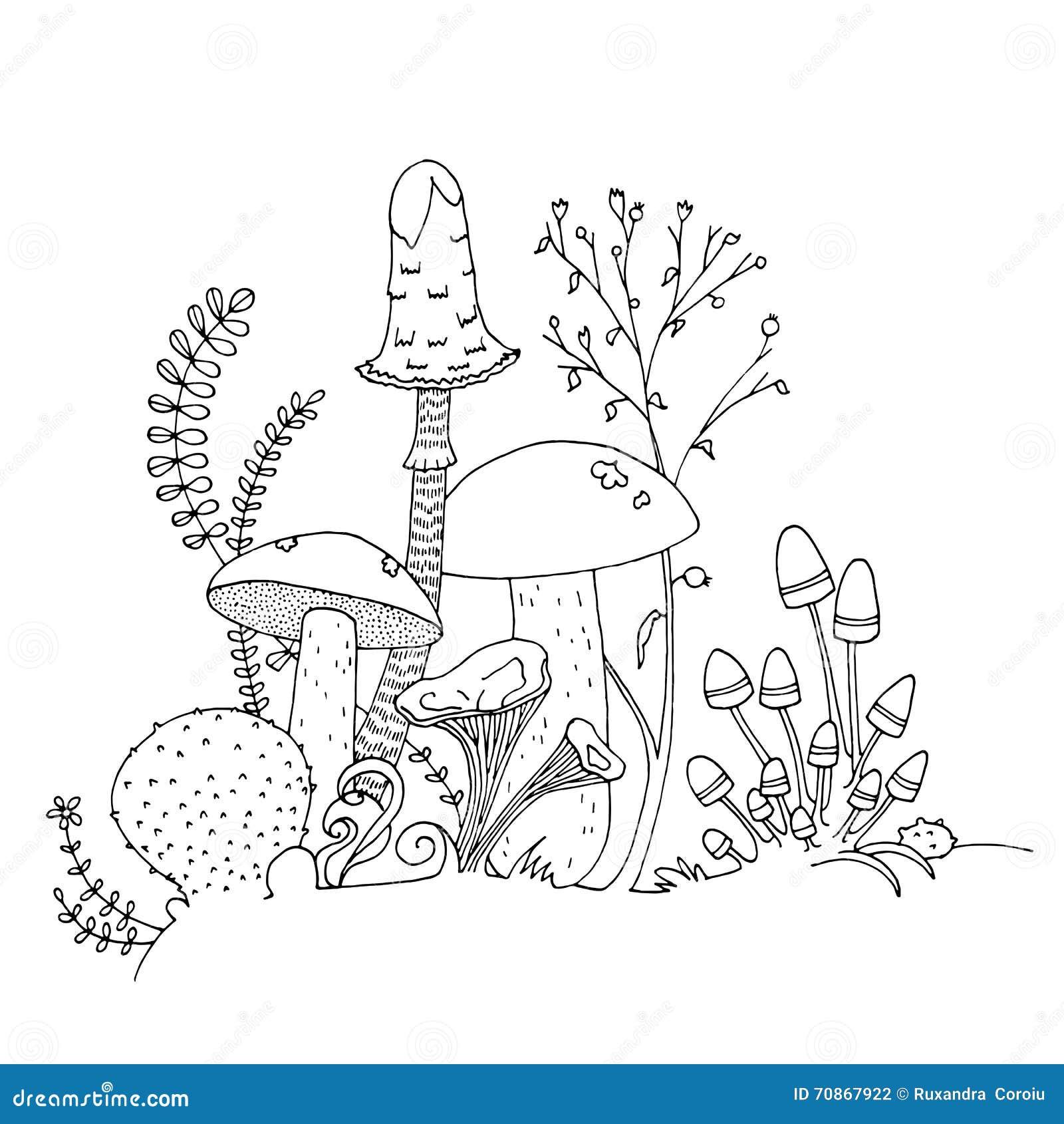 Ätliga olika champinjoner, hand dragen illustration Sida för färgläggningbok