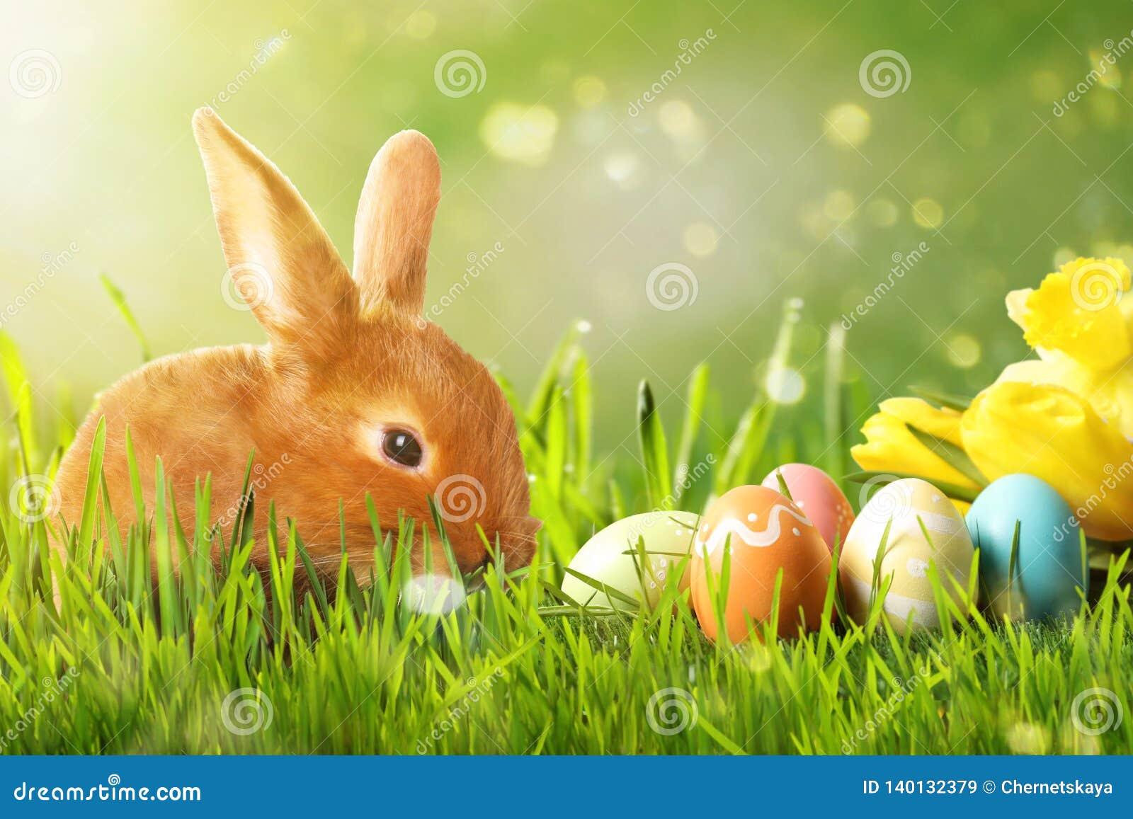 可爱的复活节兔子和五颜六色的鸡蛋在绿草