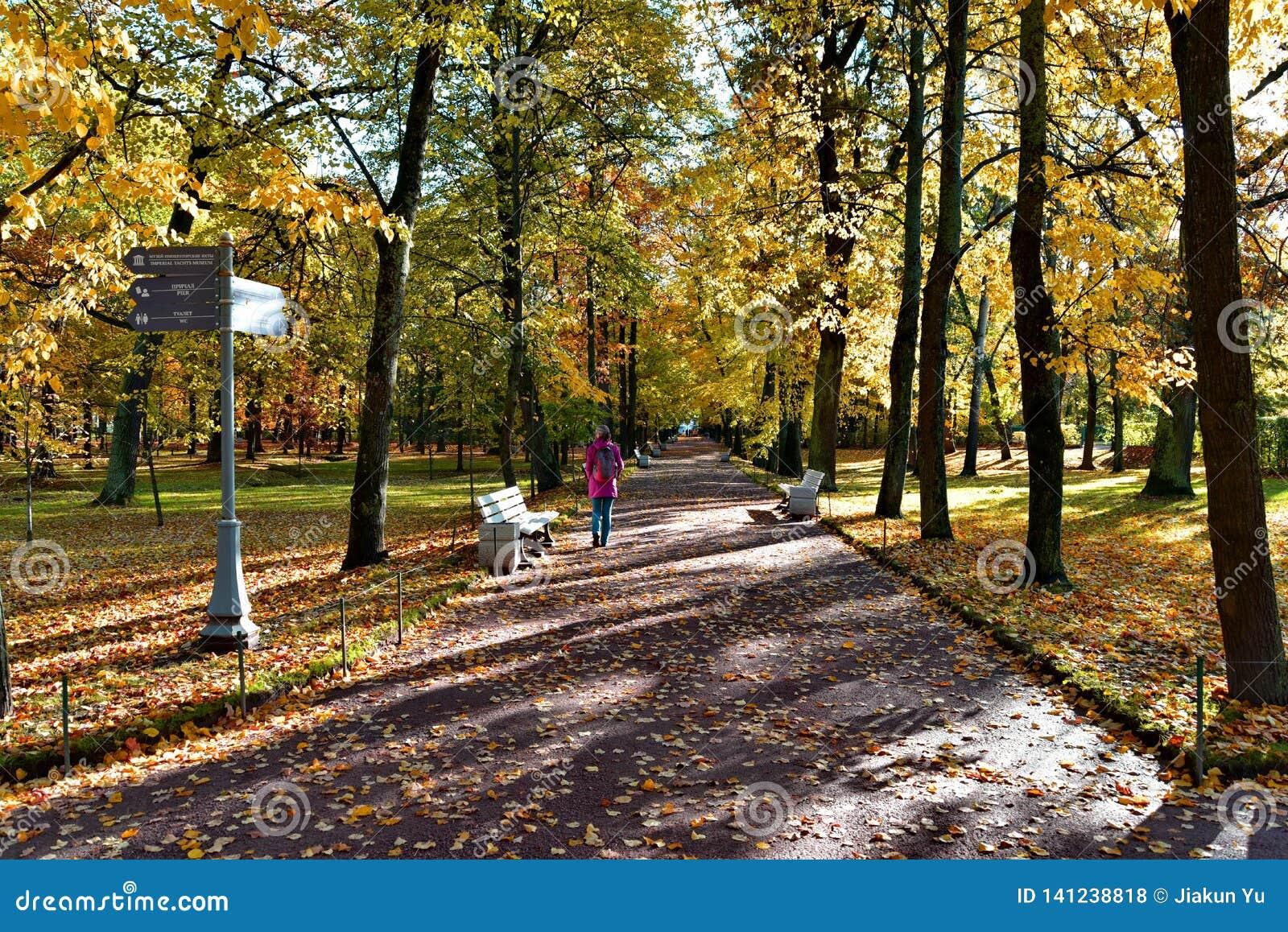 女孩沿在forestï ¼ Œ的一条道路走