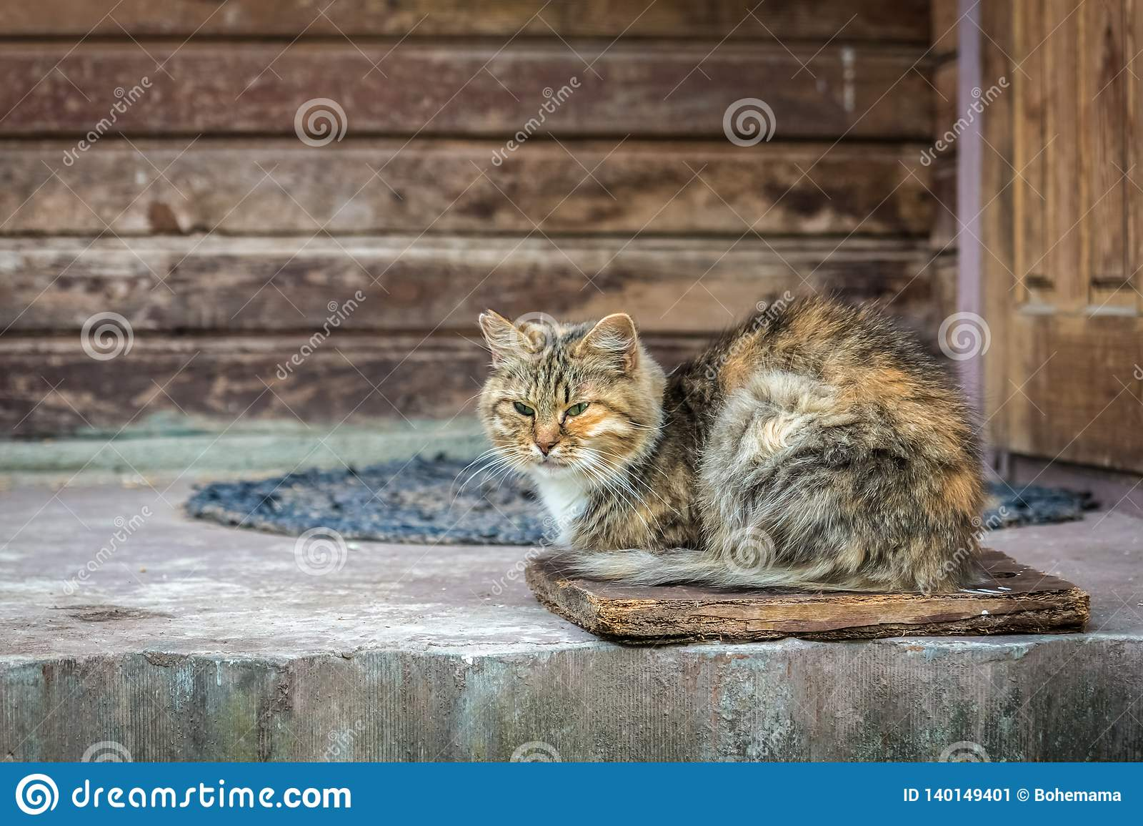 姜镶边猫坐年迈的门廊在老木房子附近的门