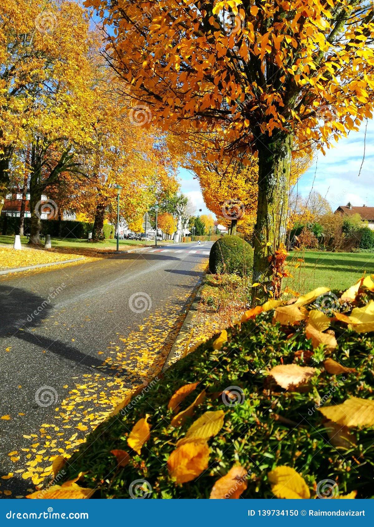 Żółci drzewa na ulicie