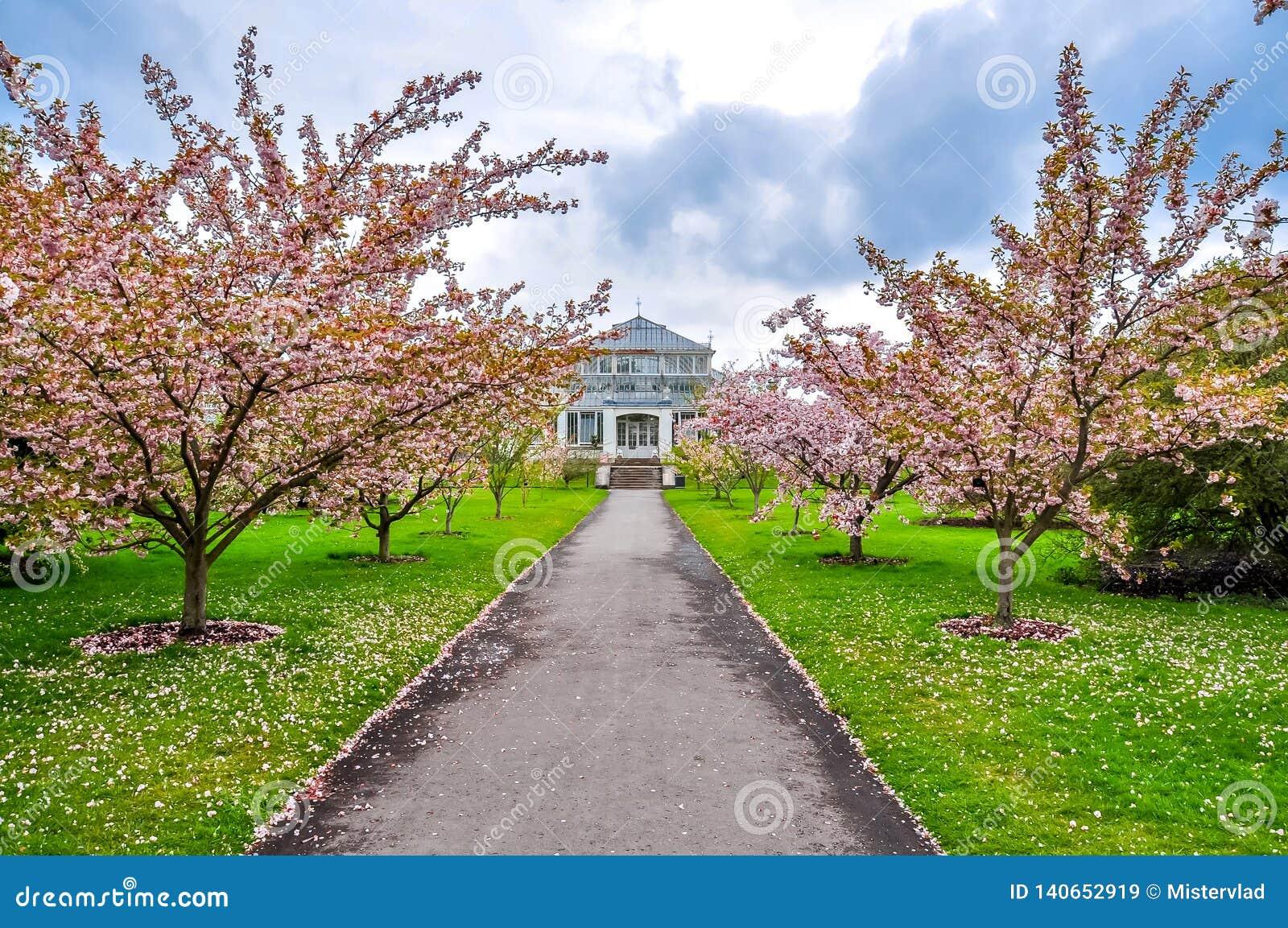 基奥植物园在春天,伦敦,英国