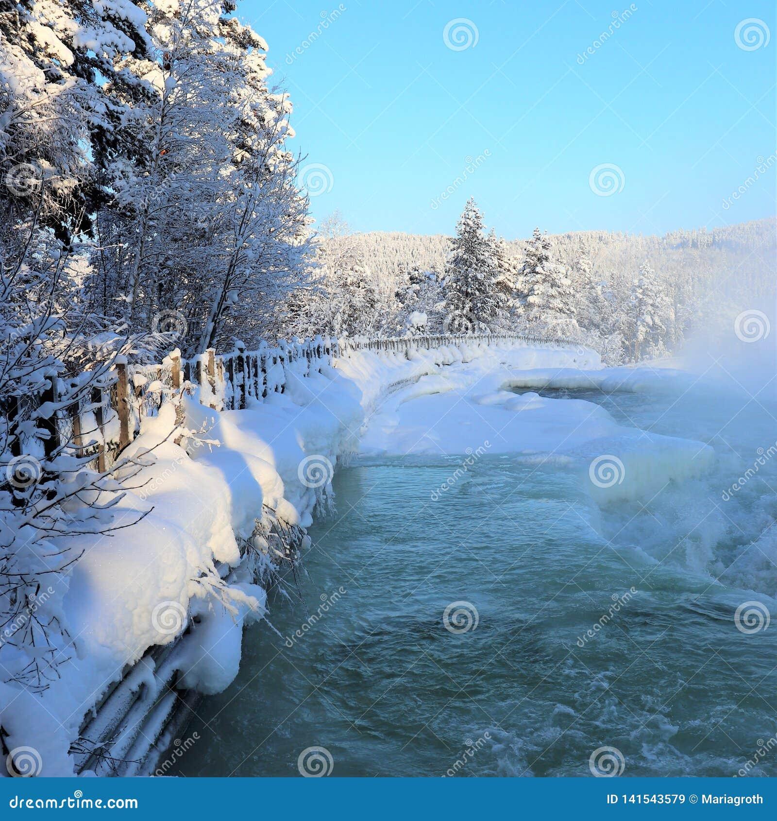 在一个美妙的冬天风景的Storforsen