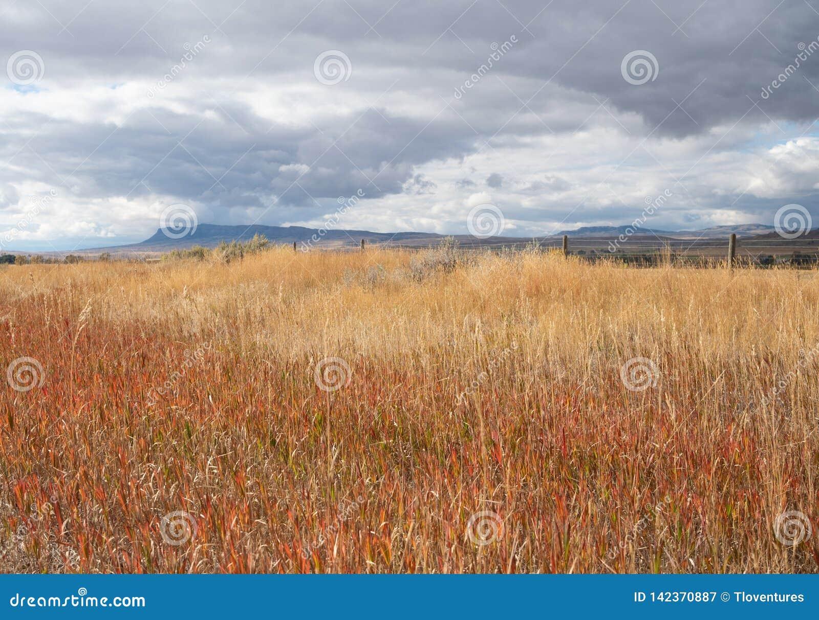 在一个领域的干草与暴风云在头顶上